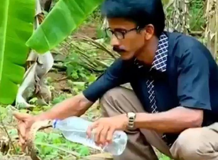 Petugas Hutan Ini Memberi Minum Ular Kobra yang Kehausan