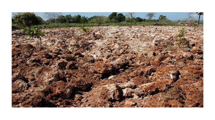 Tanah tandus berbatu sebelum diolah.