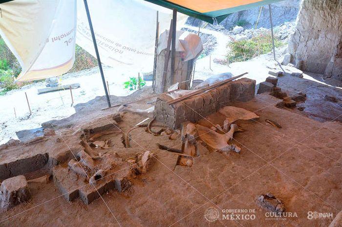 Setelah 10 bulan melakukan penggalian, para arkeolog berhasil menemukan tulang mamut.