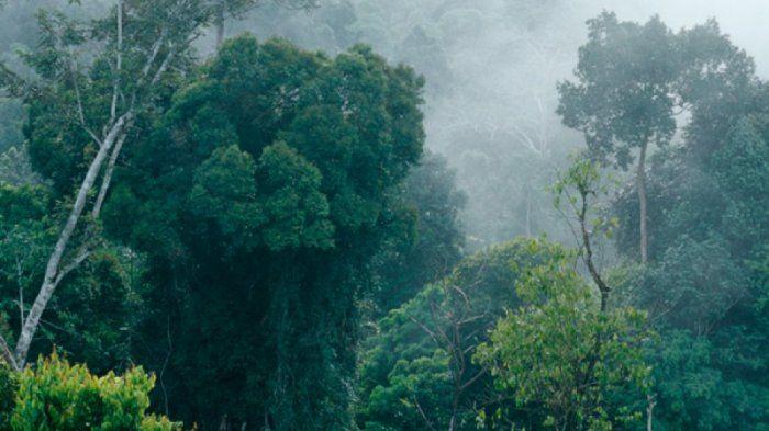 1553643845 - 5 Hutan Paling angker di indonesia yang membuat merinding