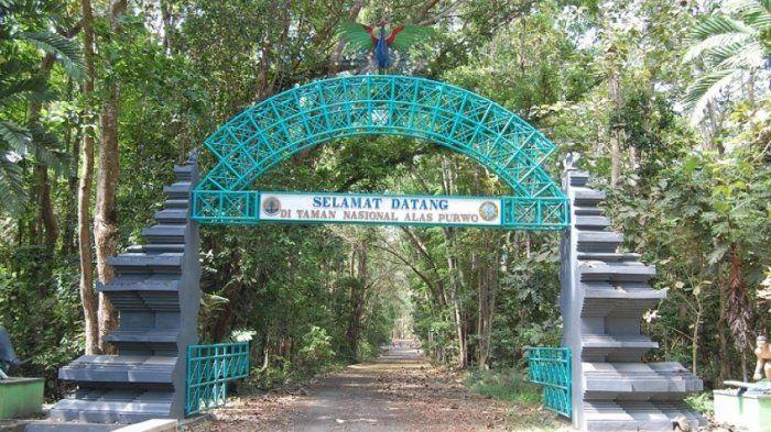 1739947764 - 5 Hutan Paling angker di indonesia yang membuat merinding
