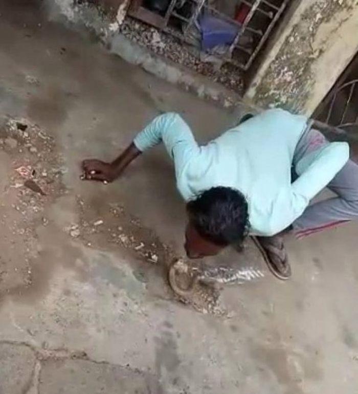 Detik=detik seorang pria pawang ular dipatuk ular kobra
