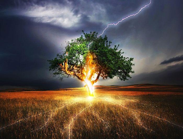 Ilustrasi pohon disambar petir