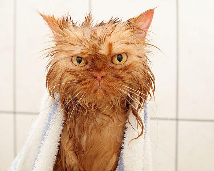 Tips Merawat Bulu Kucing Agar Tidak Rontok Dengan Cara Yang Mudah Semua Halaman Kids