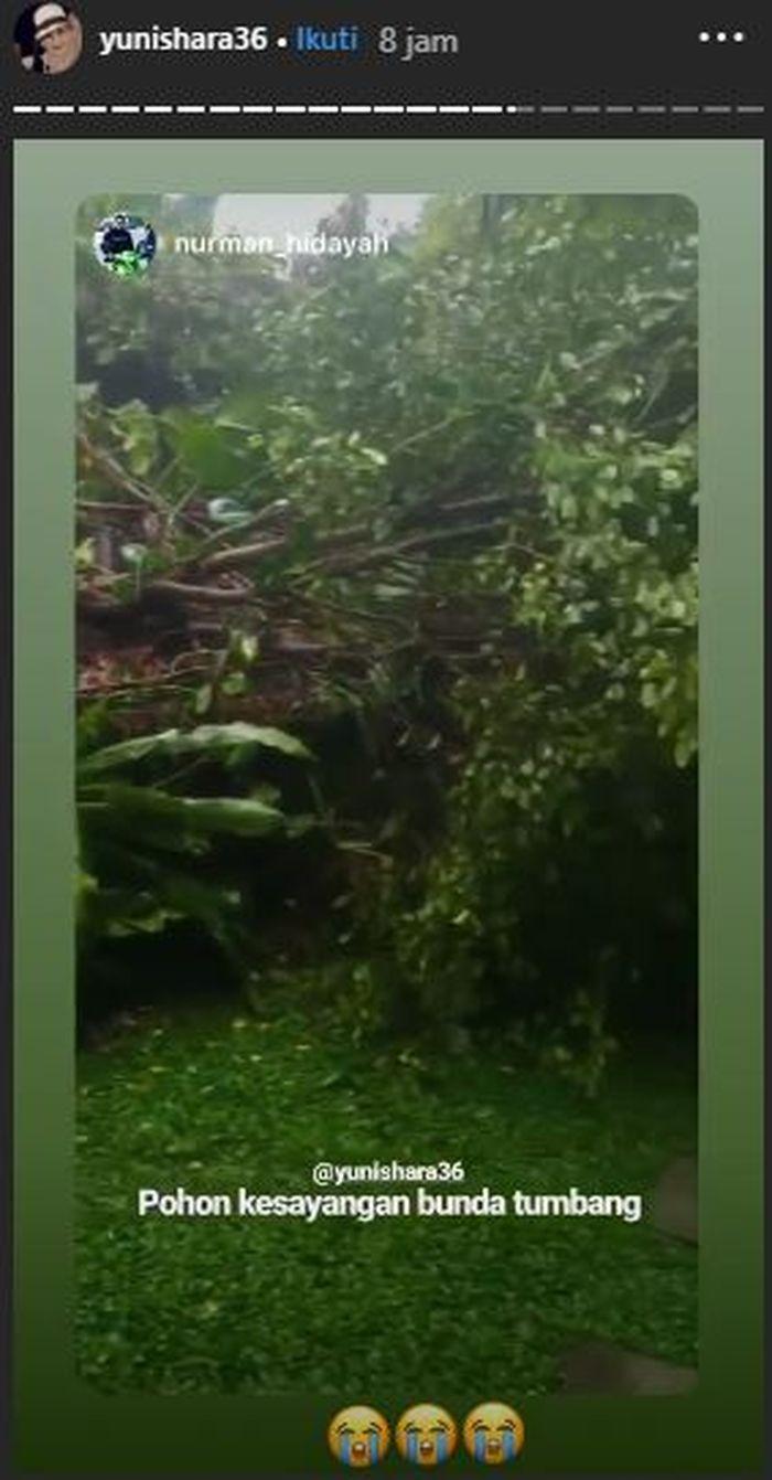 Kebun rusak dan pohon kesayangan Yuni Shara rusak lantaran