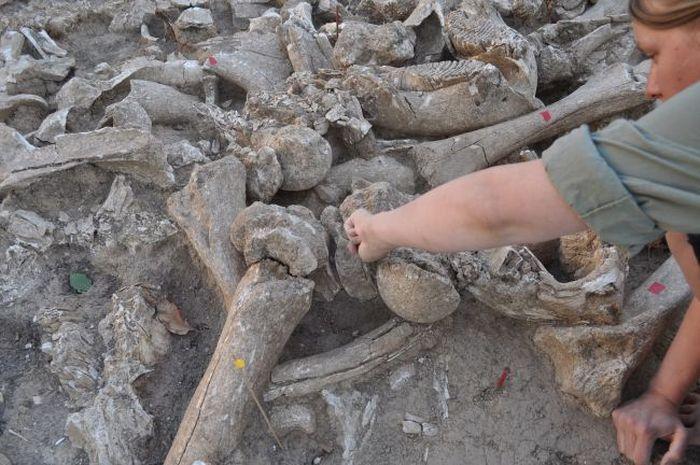 Tulang mamut yang ditemukan di situs Kostenki 11