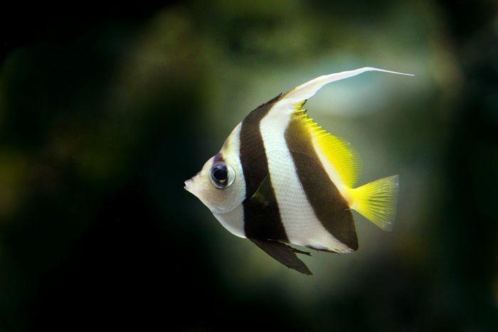 Sistem Pernapasan Pada Hewan Mamalia Reptil Amfibi Hingga Ikan