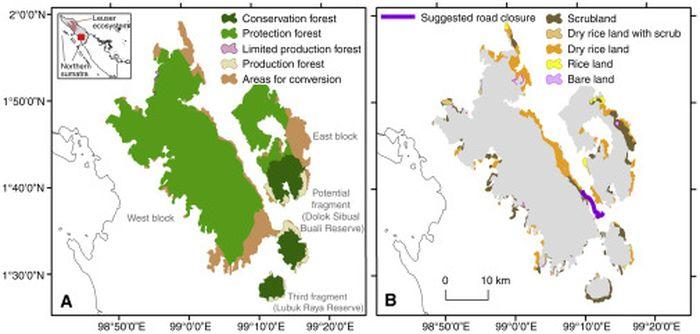 Pembagian lahan di sekitar kawasan konservasi orangutan tapanuli (pongo tapanuliensis) di sumatera utara.