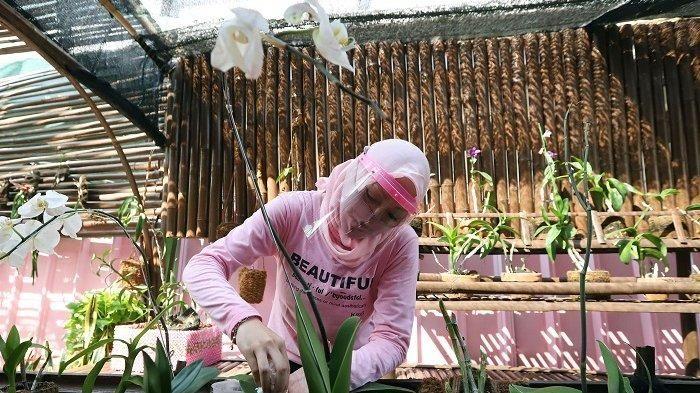 Terpidana kasus korupsi, <a href='https://medan.tribunnews.com/tag/angelina-sondakh' title='AngelinaSondakh'>AngelinaSondakh</a> tengah merawat tanaman anggrek di Lembaga Pemasyarakatan (Lapas) Perempuan Kelas IIA Pondok Bambu, Jakarta Timur, Jumat (17/7/2020). Selama berada didalam Lapas Pondok Bambu, <a href='https://medan.tribunnews.com/tag/angelina-sondakh' title='AngelinaSondakh'>AngelinaSondakh</a> mengisi waktu kosong dengan menanam sayuran hidroponik dan membaca