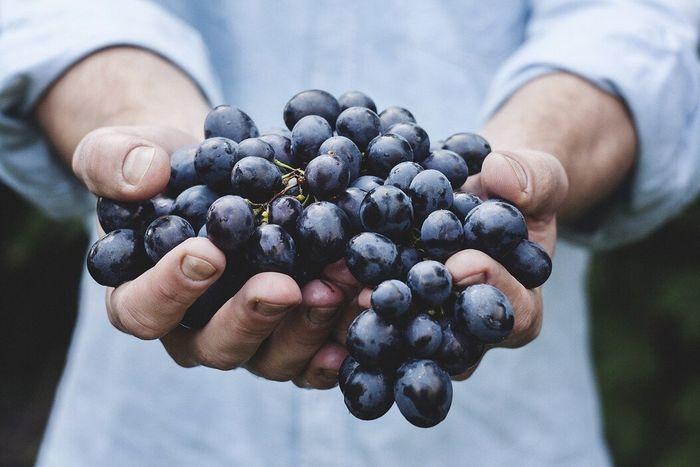 Manfaat mengonsumsi anggur bagi kesehatan tubuh.