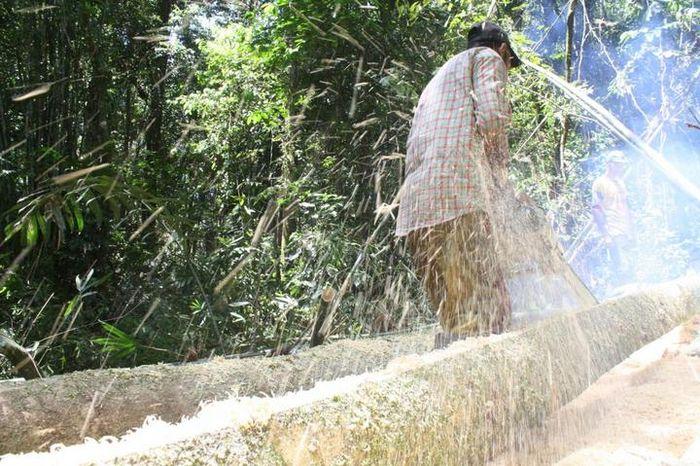Penebangan pohon secara ilegal marak terjadi di kawasan hutan lindung , Manee, Pidie, yang juga masu