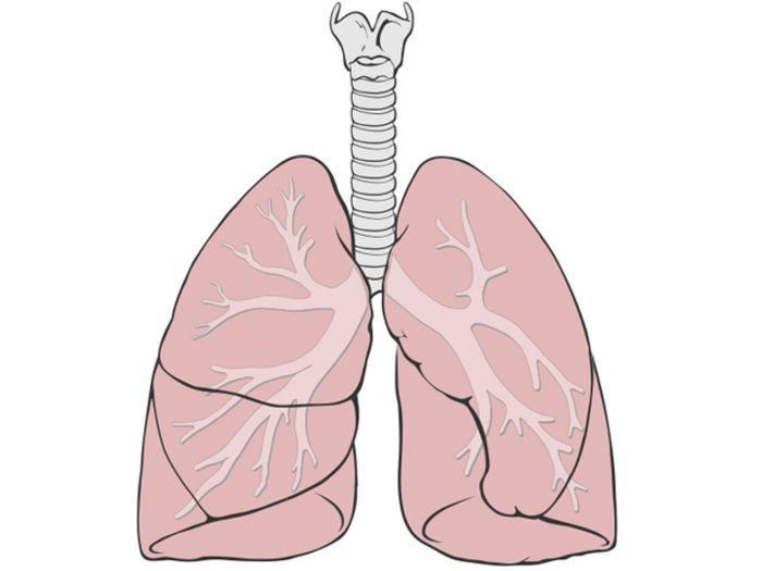 Diagram paru-paru manusia. | Patrick J. Lynch/Wikimedia Commons