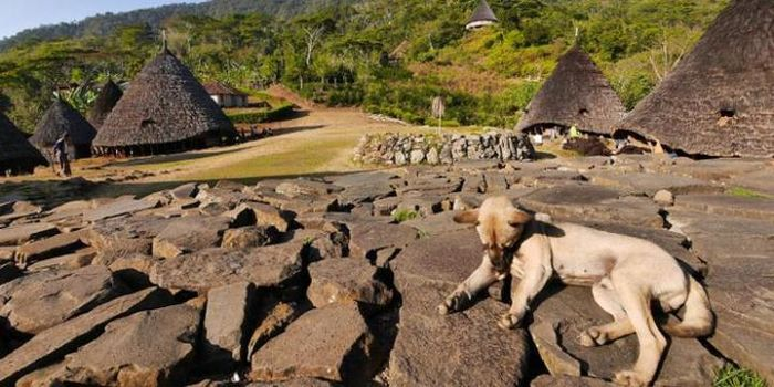 Desa Wae Rebo berada di barat daya kota Ruteng, Kabupaten Manggarai, Nusa Tenggara Timur.