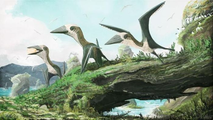 Small pterosaurs lived in the late Cretaceous with birds and large pterosaurs.