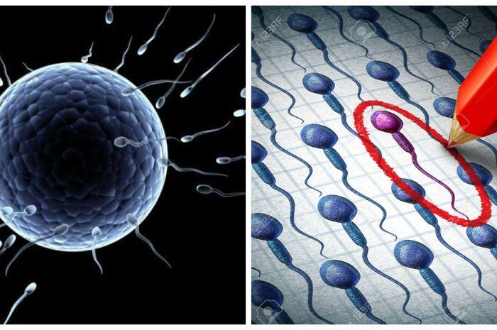 Sel telur memilih sperma
