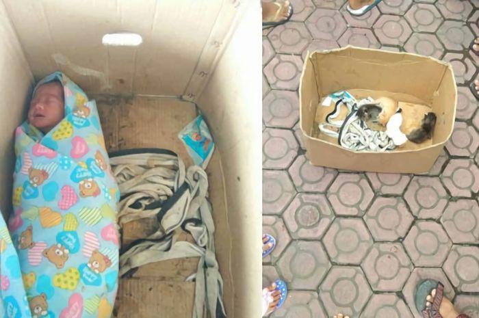 Bayi dibuang bersama anak kucing