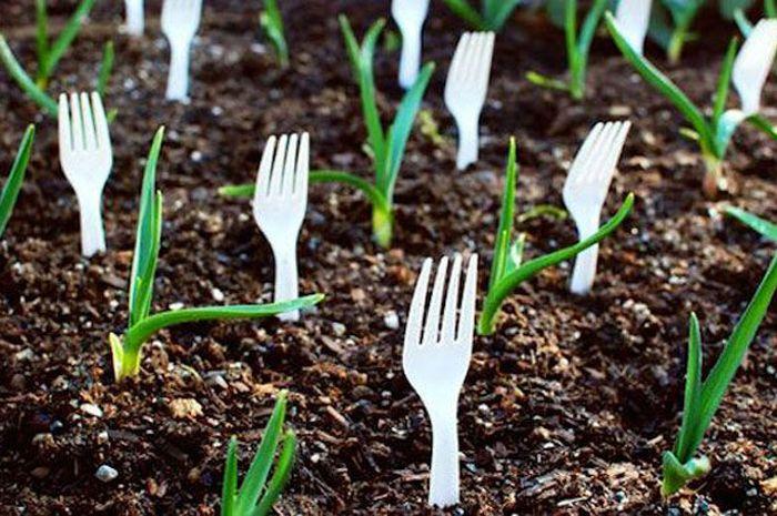 Banyak cara untuk membuat tanaman tumbuh subur