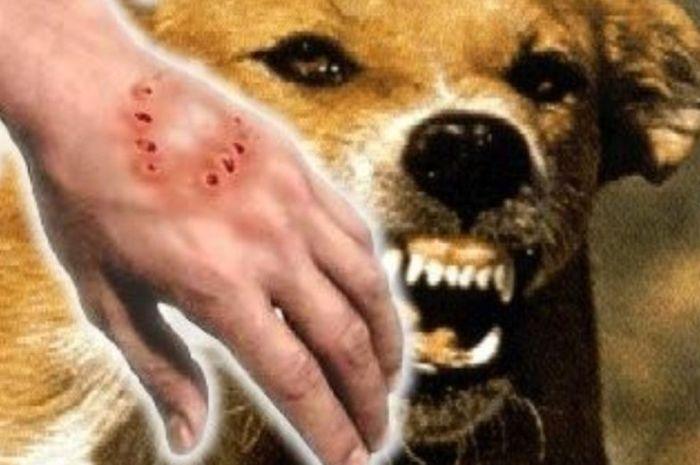 Gigitan hewan yang sebabkan rabies
