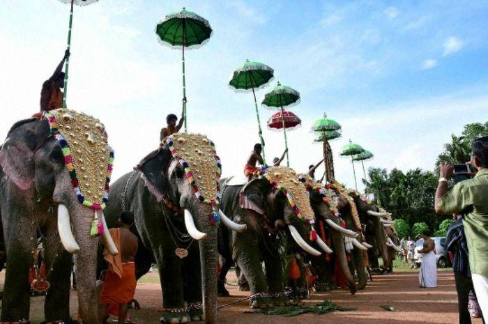 Gajah tawanan di India.
