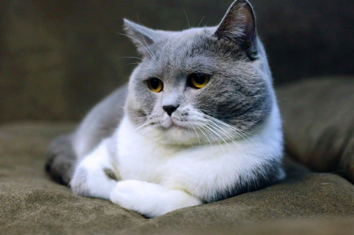 6 tanda kucing Moms tengah hamil