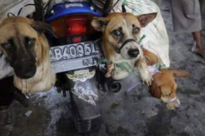 Anjing siap dieksekusi di Yogyakarta