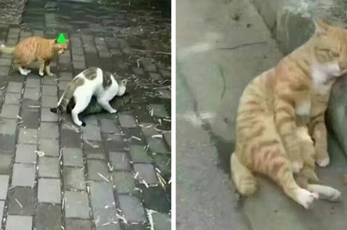 Momen si kucing