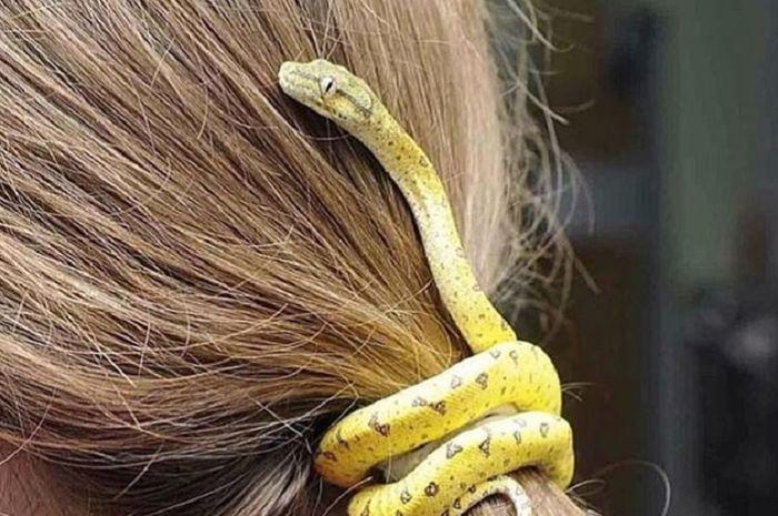 Kuncir rambut ular