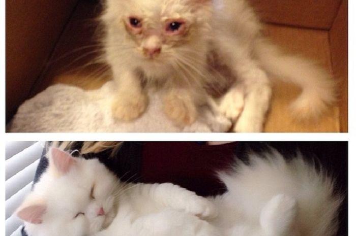 foto hewan sebelum dan sesudah diadopsi