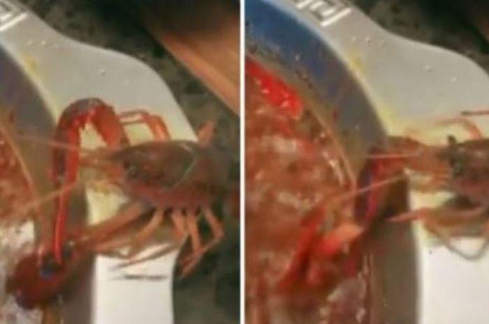 Seekor Lobster memberontak saat akan dijadikan hidangan makan malam