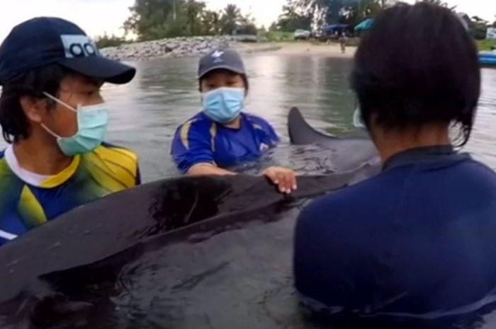 Para tim penolong mencoba menyelamatkan paus yang sekarat akibat mengonsumsi sampah plastik.