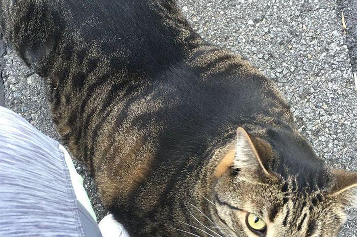 76 Gambar Gambar Kucing Online Kekinian