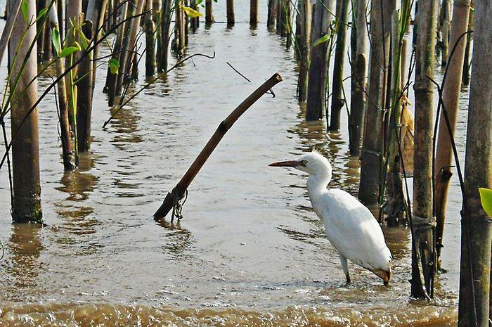 Pulau Dua, surga para burung
