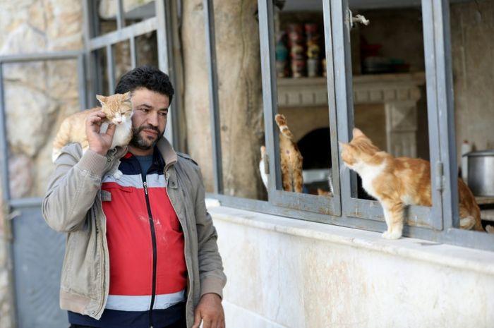 Berkat dedikasinya, Mohammed Alaa al-Jaleel mendapat julukan Manusia Kucing dari Aleppo.