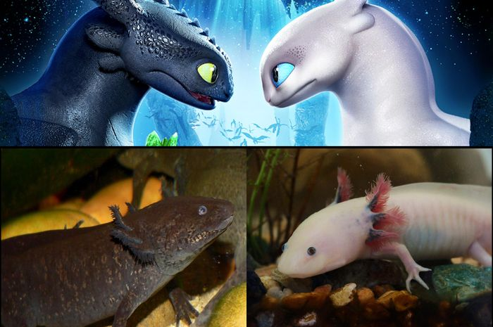 Hewan Ini Mirip dengan Night Fury dan Light Fury di How To Train Your Dragon 3