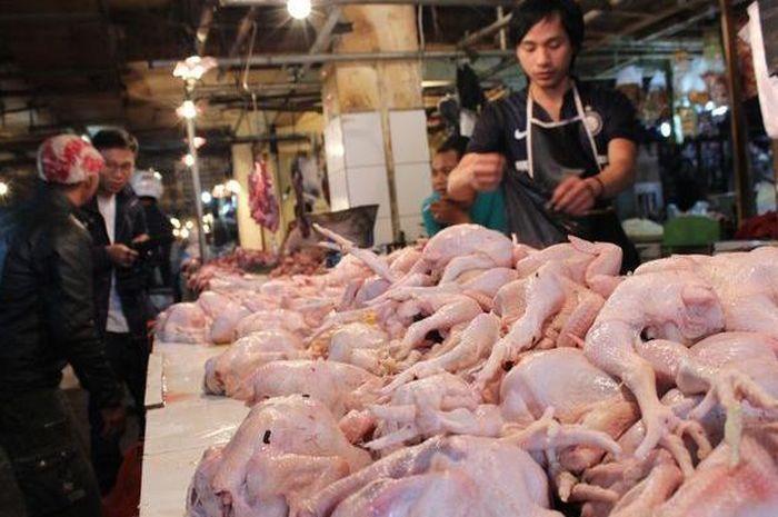 Sering Diabaikan, Ini Ciri Ayam Tiren, Tak Jauh Beda dengan Ayam Segar