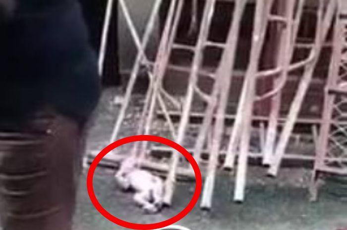 Bayi dibuang dari lantai 3