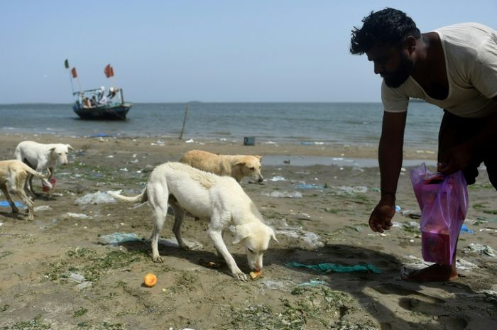 Agar selamat dari pemusnahan massal, anjing-anjing terlantar ditempatkan di pulau.