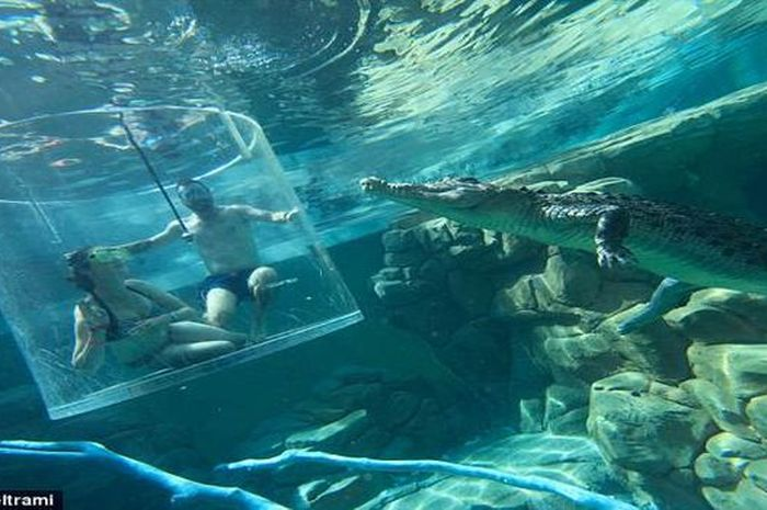 Lamaran dilakukan sambil diving