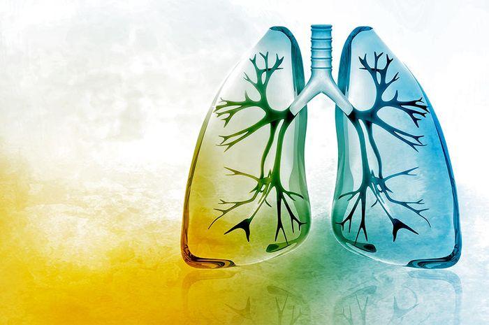 Bahan-bahan yang ampuh bersihkan paru-paru