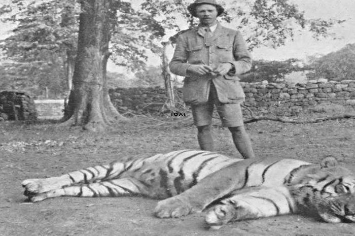Harimau India yang telah membunuh ratusan orang pada abad 20