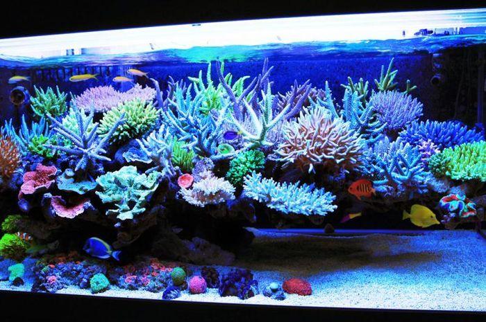 5 Tips Memelihara Ikan Laut Di Rumah Dari Air Hingga