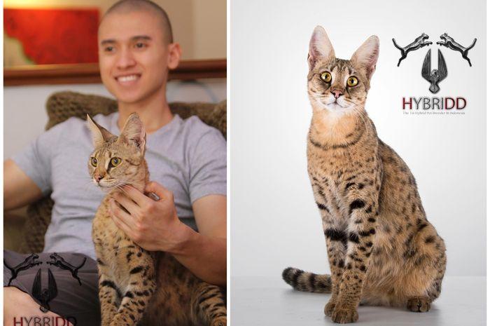 Savannah, kucing termahal di dunia