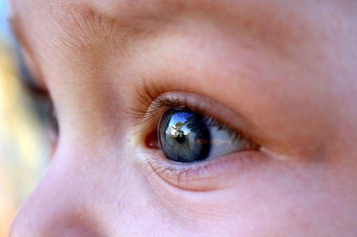 Dari mana warna bola mata berasal?