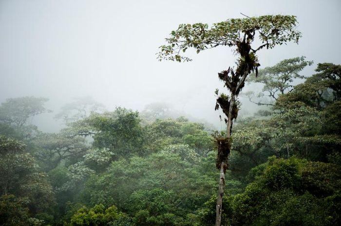 Lembah Quijos di Ekuador menyimpan jejak peradaban yang hilang.