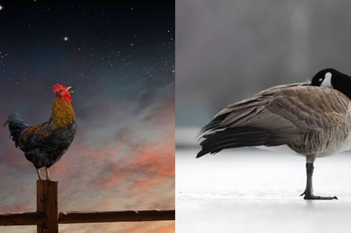 Unduh 8200 Koleksi Gambar Lucu Ayam Anak Satu Terlucu