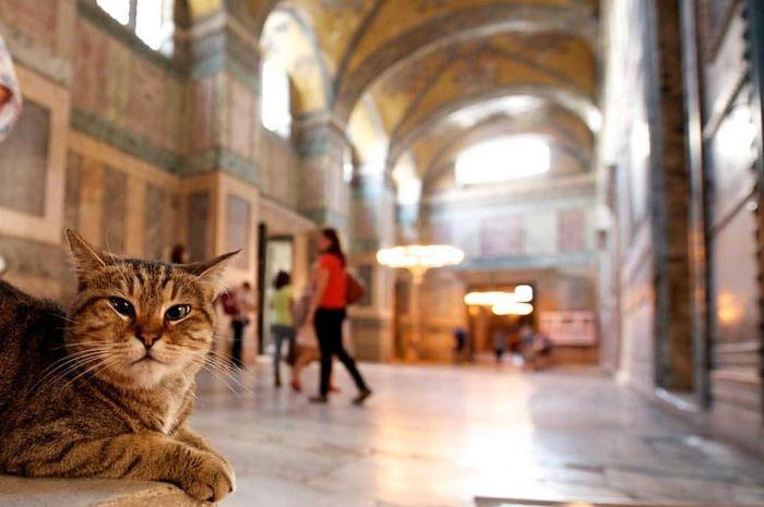 Kucing Gli.