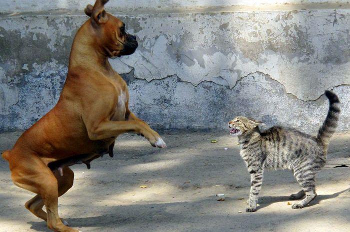 Benarkah anjing dan kucing selalu berkelahi?