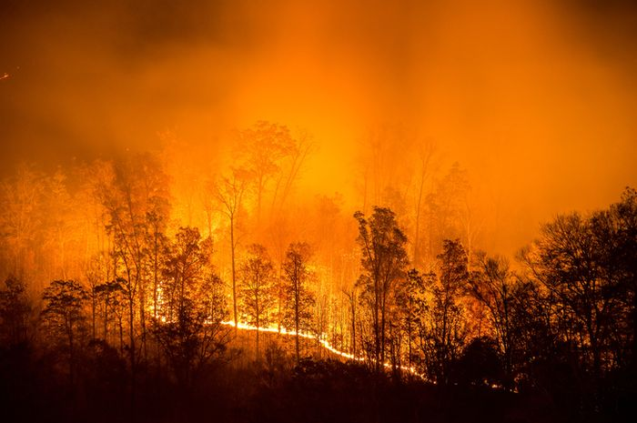 Kebakaran hutan.