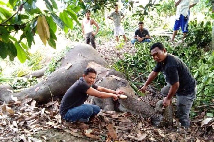 Gajah liar yang ditemukan mati dengan belalai terbakar.