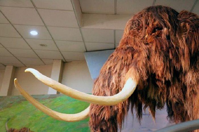 Mammoth yang ada sekitar 400 ribu tahun lalu di Asia Timur